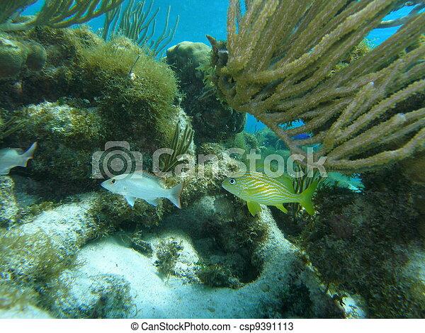 Flora and Fauna of Caribbean Sea - csp9391113