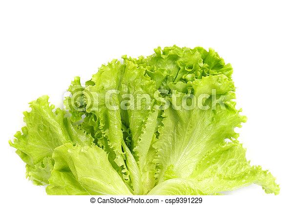 Fresh salad lettuce - csp9391229