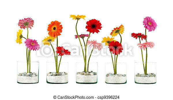 Gerbera flower row - csp9396224