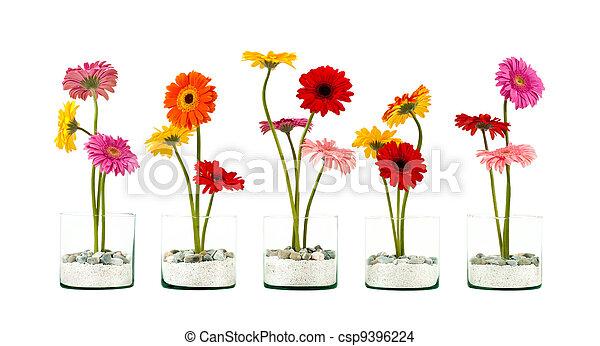Gerbera flower row - csp9396224