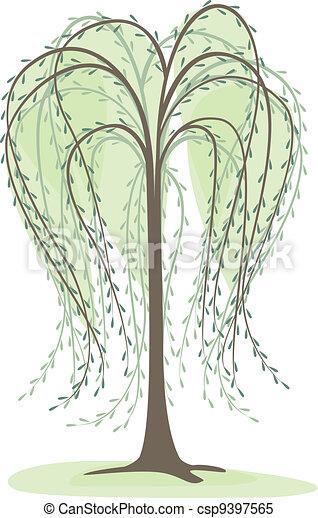 willow - csp9397565