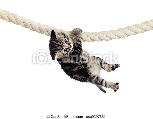 funny baby cat hanging on rope - csp9397881