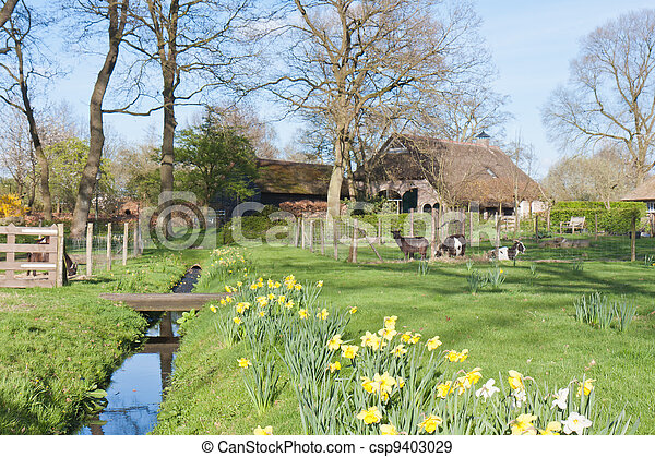 Dutch rural scene with farmhouse and goats - csp9403029