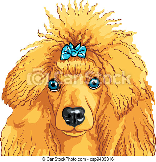 vector color sketch of the dog red Poodle breed - csp9403316