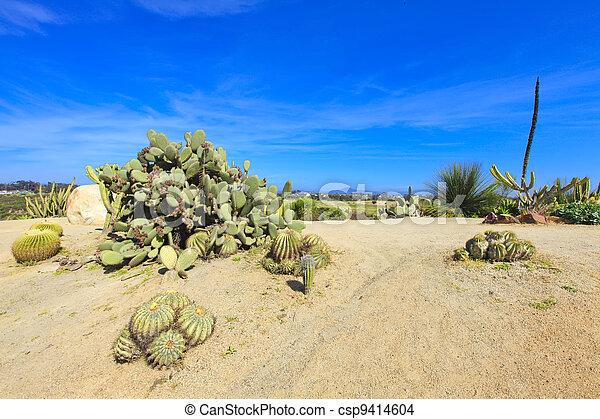 Balboa park in San Diego, cactus garden with desert. - csp9414604