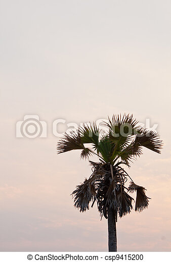 Coconut trees at sunset - csp9415200
