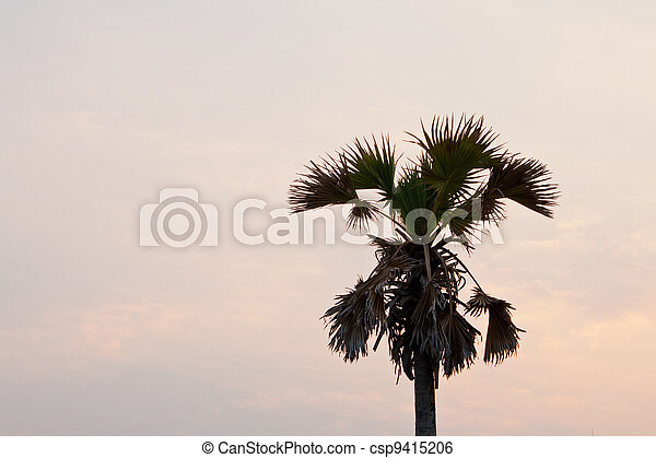 Coconut trees at sunset - csp9415206