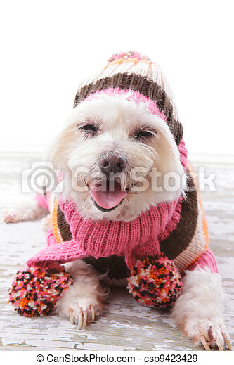 Happy Dog in warm woolen sweater and scarf - csp9423429