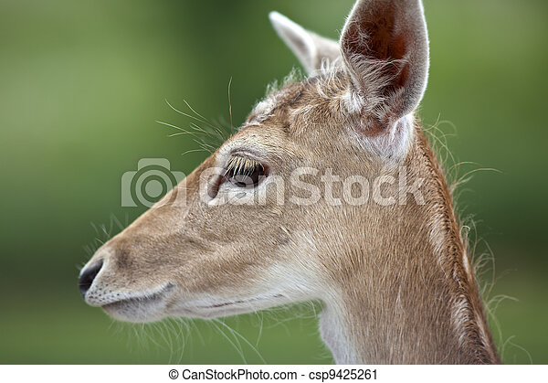 White Tailed Deer - csp9425261