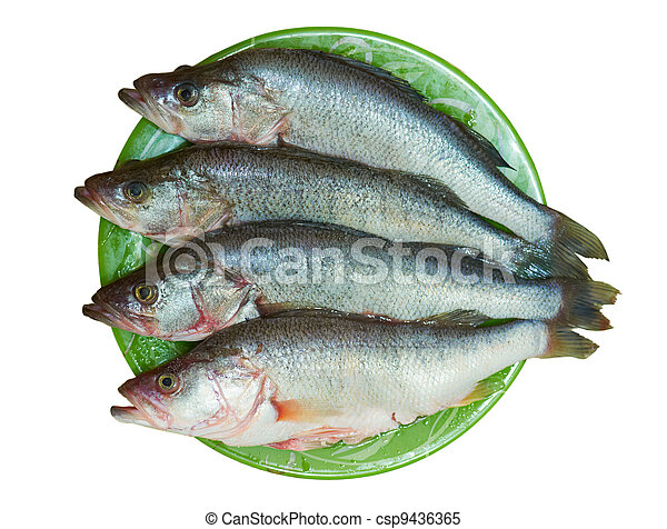 Fresh fish is perch on a plate - csp9436365
