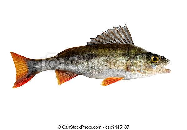 Fish - csp9445187