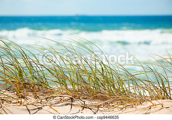 Green grass on sandy dune overlooking beach - csp9446635