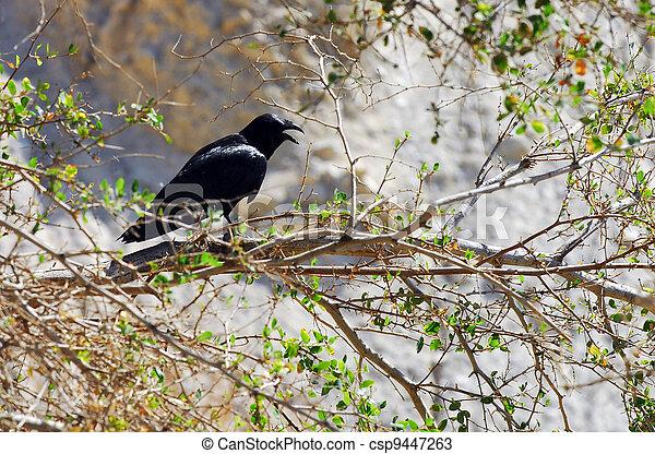 Wildlife Photos - Tristram's Starling - csp9447263