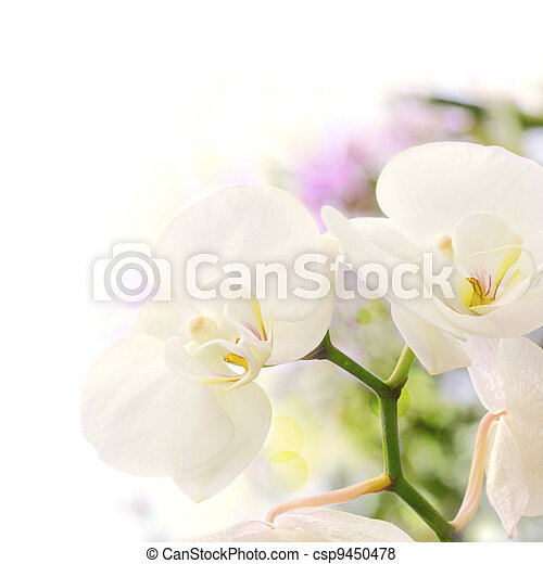 white orchids over a blur background with bokeh effect, with green yellow and purple colors, decorative background border - csp9450478