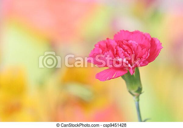 pink carnation - csp9451428