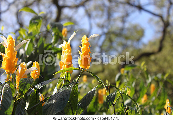 tropical yellow flowers in the sunlight - csp9451775