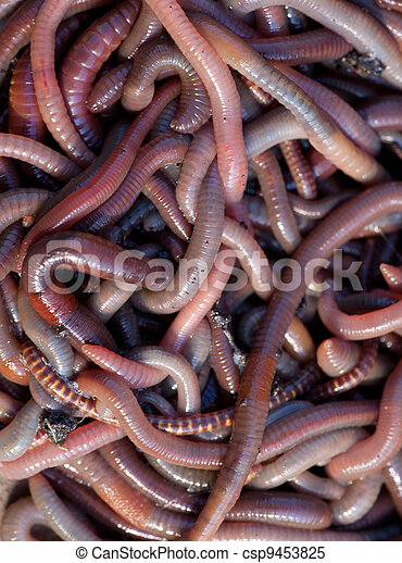 Huge amount of earthworms close to fishing - csp9453825