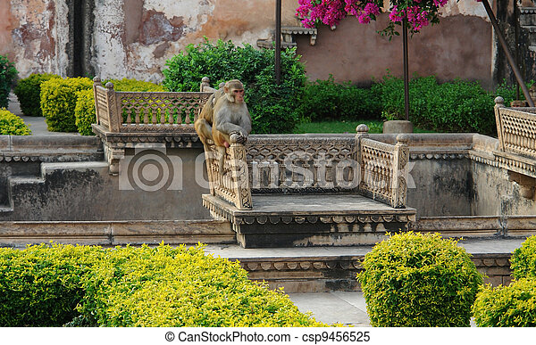 apes at Bundi Palace - csp9456525