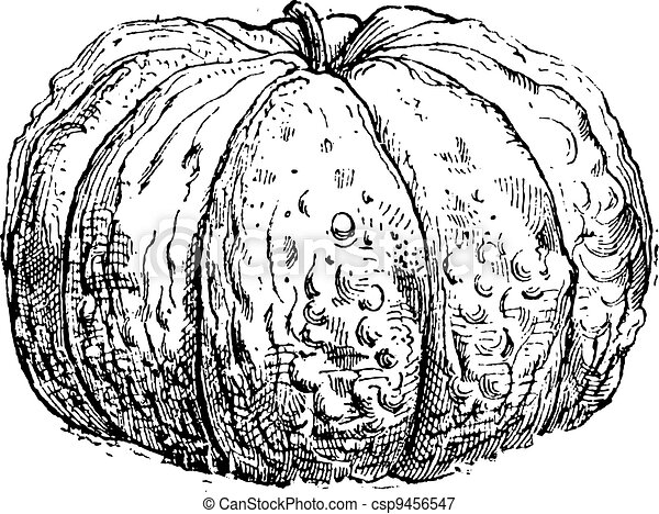 Cantaloupe or Cucumis melo var. cantalupensis, showing fruit, vintage engraved illustration. Dictionary of Words and Things - Larive and Fleury - 1895 - csp9456547