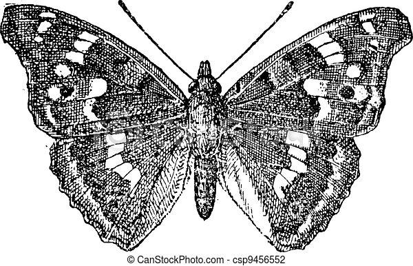 Lesser Purple Emperor or Apatura ilia, vintage engraving - csp9456552