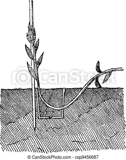 Ground Layering in Pot, vintage engraving - csp9456687