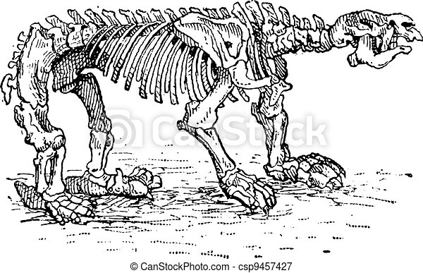 Megatheriid Ground Sloth or Megatherium sp., vintage engraving - csp9457427
