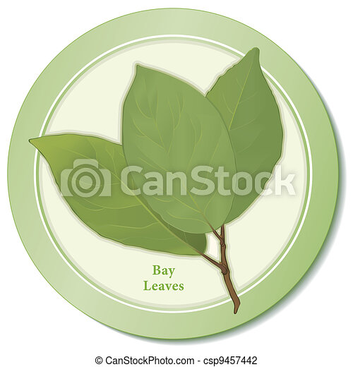 Bay Leaves Herb Icon - csp9457442