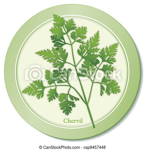 French Chervil Herb Icon - csp9457448