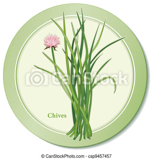Chives Herb Icon - csp9457457