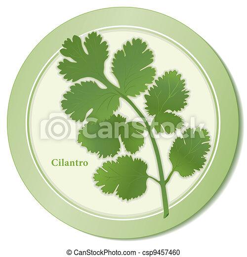 Cilantro Herb Icon - csp9457460