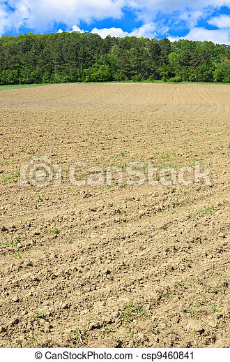 Agriculture field over green forest and blue sky - csp9460841