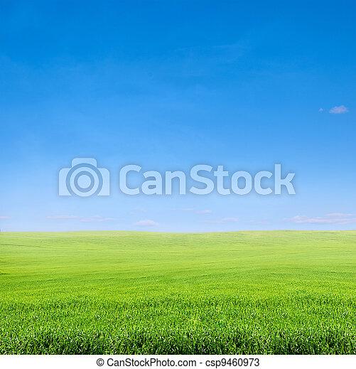 field of green grass over blue sky - csp9460973