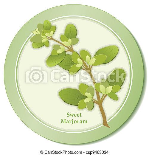 Sweet Marjoram Herb Icon - csp9463034