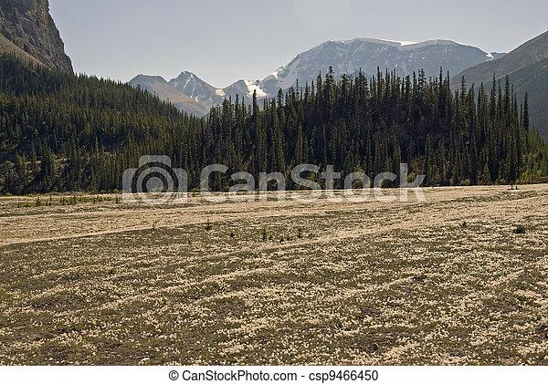 Sunwapta Pass, Canadian Rockies, Alberta - csp9466450