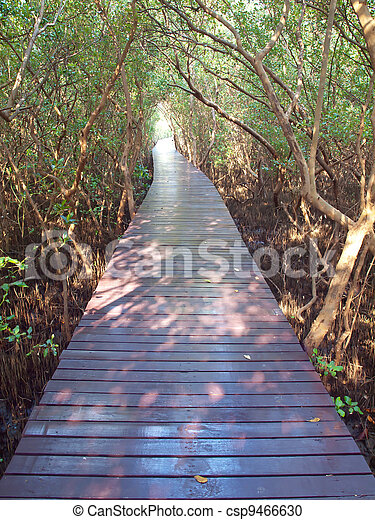 Underpass of trees - csp9466630