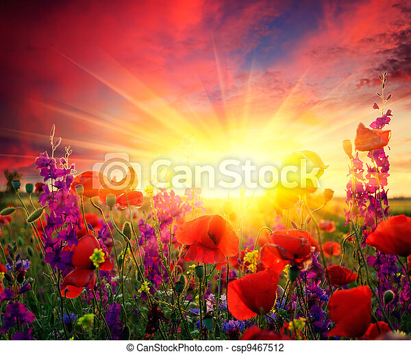 Field of flowering poppies - csp9467512