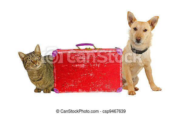 Let´s Travel! Dog and cat with a suitcase. - csp9467639