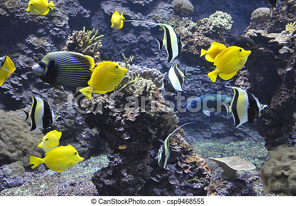 Many Yellow Tropical Fishes - csp9468555