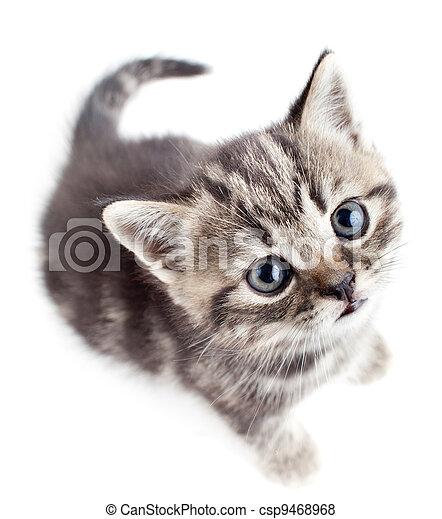 little baby kitten looking upwards top view - csp9468968