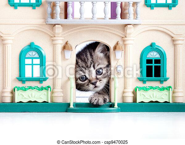 kitten looking out toy house door - csp9470025