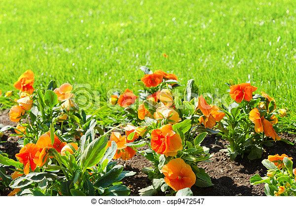 flower with green grass - csp9472547