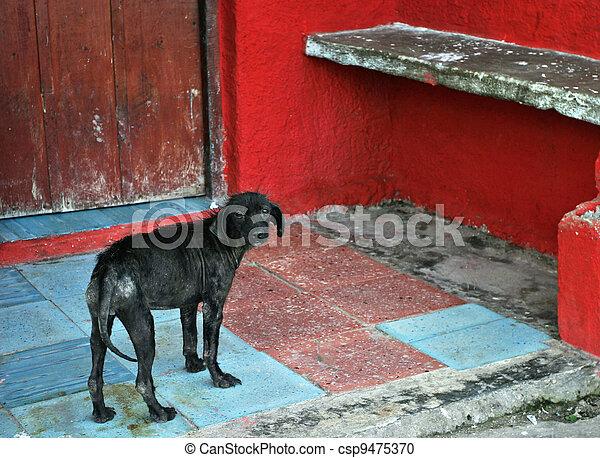 Dog - csp9475370