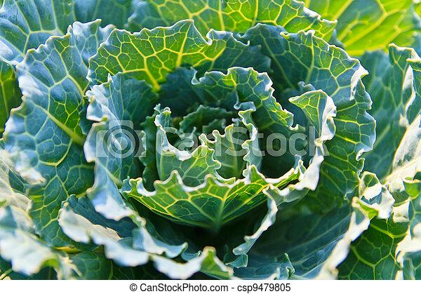蔬菜, 綠色 - csp9479805