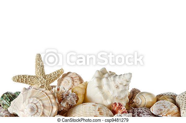 Collection of seashells  - csp9481279