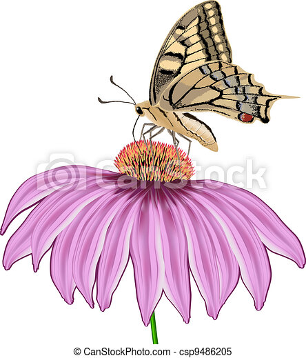 Clipart Vector of butterfly on a flower Echinacea isolated ...
