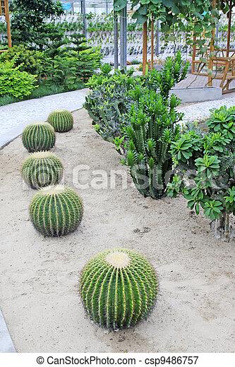 cactus kind succulent plant - csp9486757