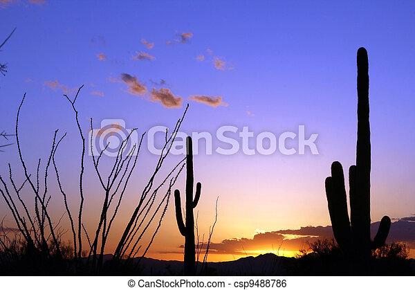 Saguaro sunset - csp9488786