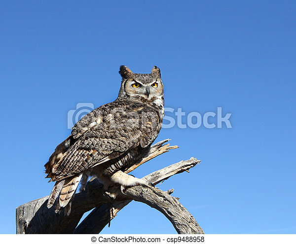 Great Horned Owl - csp9488958