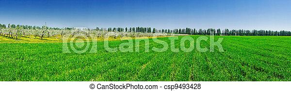 Serenity green field and garden in spring. - csp9493428