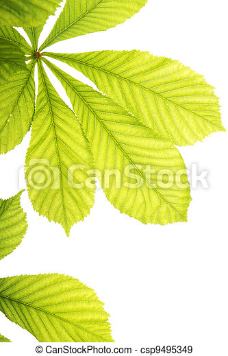 Fresh chestnut leafs - csp9495349